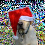 Labrador Nikolaus